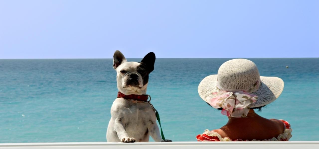 Ferienhäuser mit Hund
